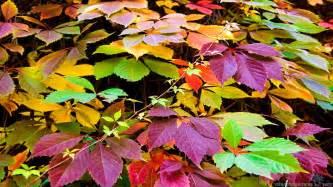 colorful leaves colorado 1652319