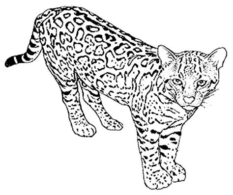 Sleepy Head Leopard Coloring Pages Batch Coloring Leopard Coloring Page