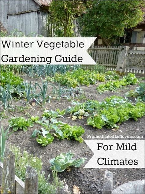 Winter Garden Vegetables Winter Vegetable Gardening Guide For Mild Climates
