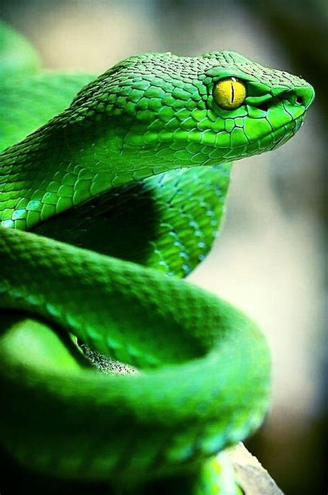 Lu Reptil 230 best images about reptiles hibians lizards on