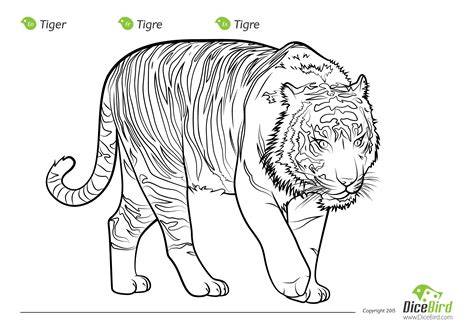 coloring pages endangered animals endangered animals coloring pages the tiger free printable