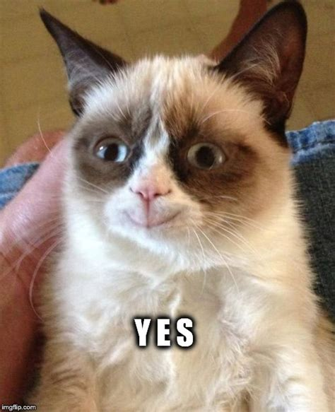 Grumpy Cat Yes Meme - grumpy cat yes imgflip