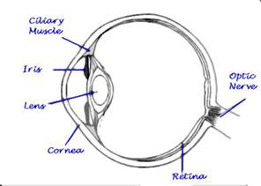 simple diagram of human eye draw a well labelled diagram of human eye how will you