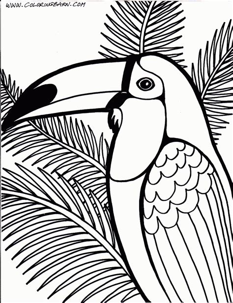 coloring page of a toucan bird toucan coloring page printables pinterest bird