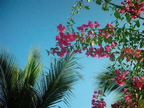 palm trees and flowers picture of comfort inn los cabos cabo san lucas tripadvisor