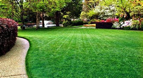 tips to maintain a beautiful green grass lawn green