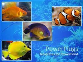 Fish Powerpoint Templates Crystalgraphics Fish Powerpoint Template