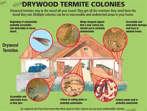 pin  termites