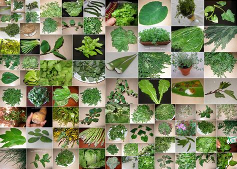 green vegetables p image gallery identify green leafy vegetable