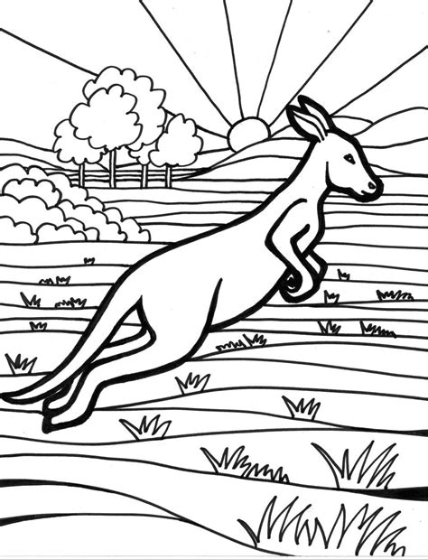 coloring pages australian animals kangaroo coloring