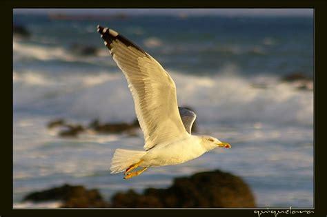 imagenes sensoriales de la novela juan salvador gaviota juan salvador gaviota fotos de europa