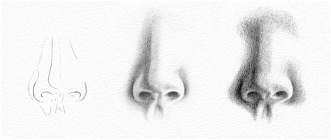 Sketches Nose by Pencil Portraits How To Draw A Nose