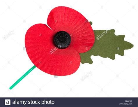 remembrance day poppy on white cut out uk stock photo royalty free image 41331290 alamy