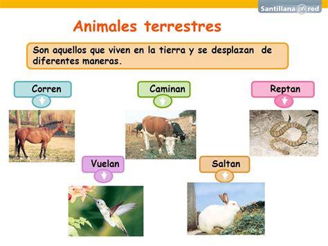 imagenes animales que reptan el mundo de los animales ppt video online descargar