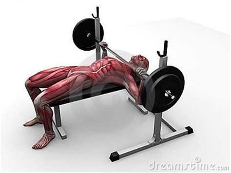 bench press clips bench press clipart clipart suggest