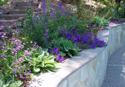 California Plants For The Garden by Plant Combinations Northern California Gardens