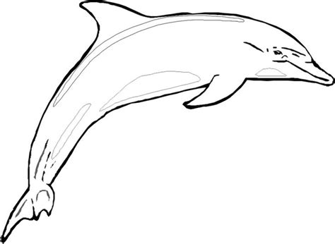 preschool coloring pages dolphin preschool dolphin craft with template shark coloring