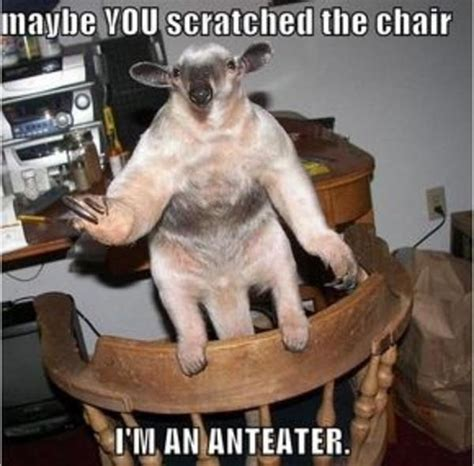 Anteater Meme - image 783 i m an anteater know your meme