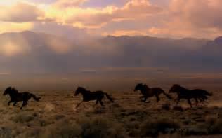 Black Mustangs Horses Wild Horses Inspire Part One Wild Horse Education