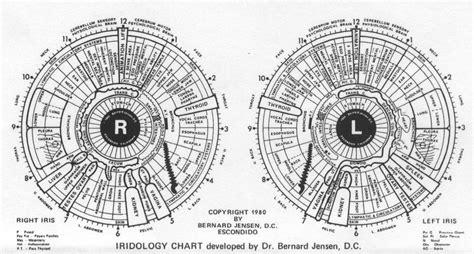 printable iridology eye chart iridology chart detox net au
