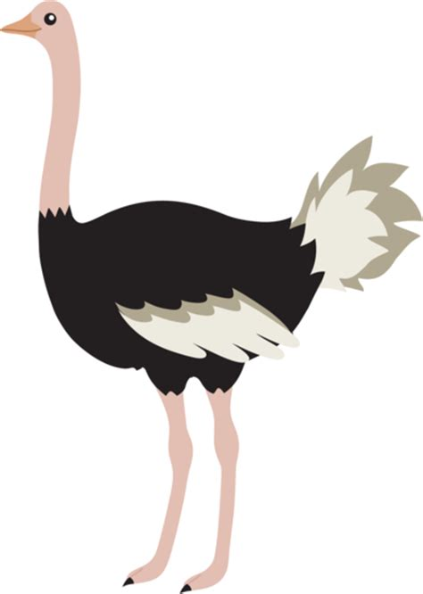 ostrich clipart ostrich bird free clip