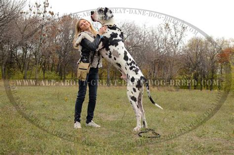 great dane puppy pictures unique harness for great daneoffered by store