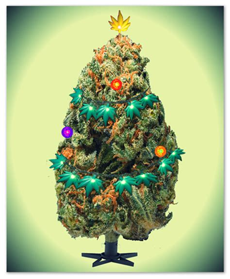marijuana christmas tree pics marijuana tree lands in cannabis news media current events cc forums