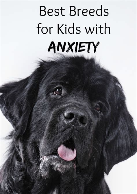 best breeds for best breeds for with anxiety dogvills