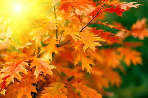 fresh paint scheme lets you enjoy fall colors inside your home paint quality institute