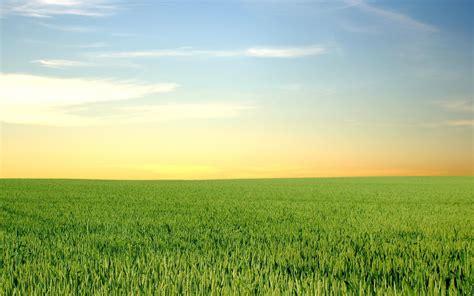 daily wallpaper green fields  blue skies