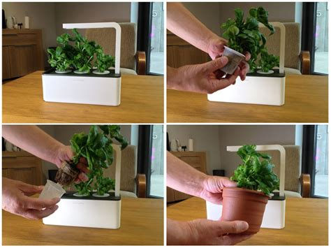 smart herb garden grow your herbs on your kitchen counter with smart herb garden
