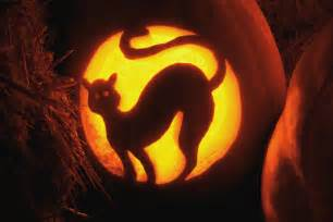 Displaying 18 gt images for cat pumpkin carvings