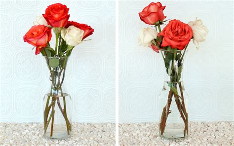 Aspirin In Flower Vases how to keep roses alive more