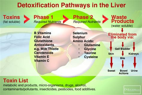 Ammonia In Human How To Detox by Cbs Mutation And Low Sulfur Diet Drjockers