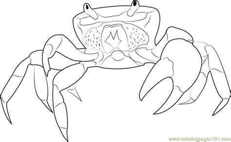 ghost crab coloring page halloween crab coloring page free crab coloring pages