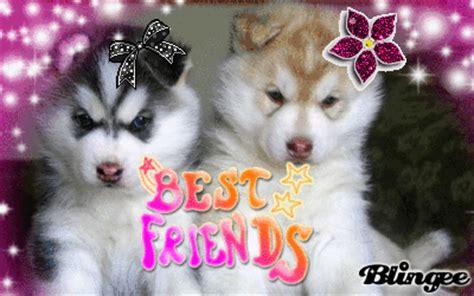 best friend puppies best friend puppies 1 picture 124263904 blingee