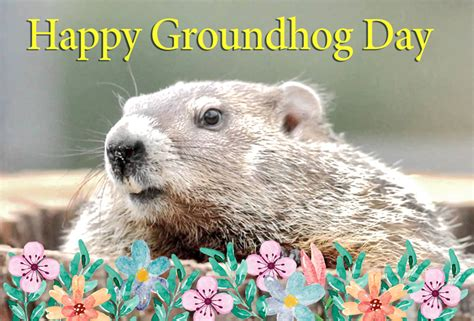 Similiar groundhog day e cards keywords groundhog day greeting cards pictures animated gifs m4hsunfo
