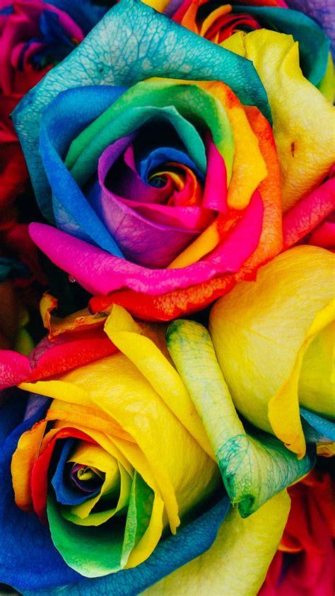 rainbow roses wallpaper iphone android desktop