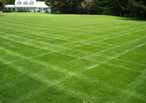 grass alternatives keep the grass bob vila