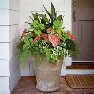 best 25 front porch plants ideas on pinterest front