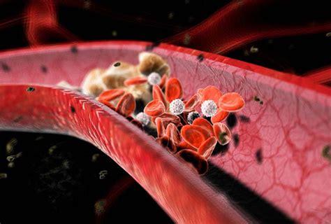 alimenti vietati per colesterolo alto alimenti per abbassare il colesterolo i cibi permessi e