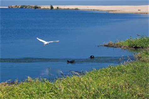san jose cabo estuary map the estuary a sanctuary in san jose cabo