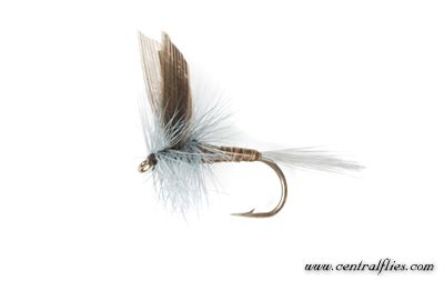 blue quill pattern dry fly blue quill