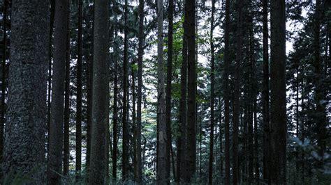 the black forest germany black forest germany