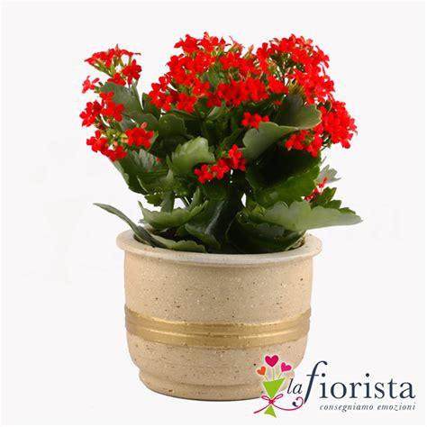 fiori a domicilio vendita kalanchoe consegna fiori a domicilio gratis