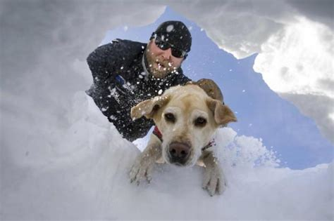 puppies rescued from avalanche avalanche rescue school taking place at snowbird unofficial networks
