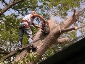 Tree Service In Asplundh Tree Service Tree Service