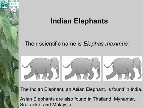 botanical name of elephant ritc indian elephant