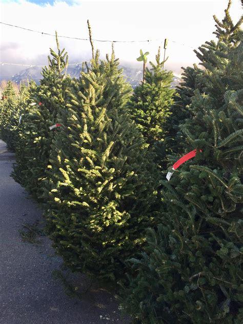 glover nursery christmas trees
