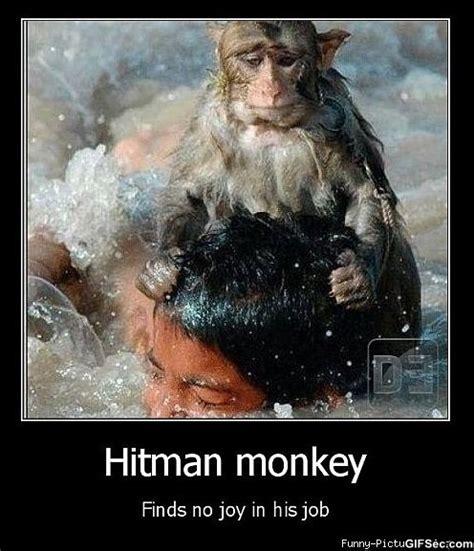 Funny Monkey Memes - funny monkey love memes